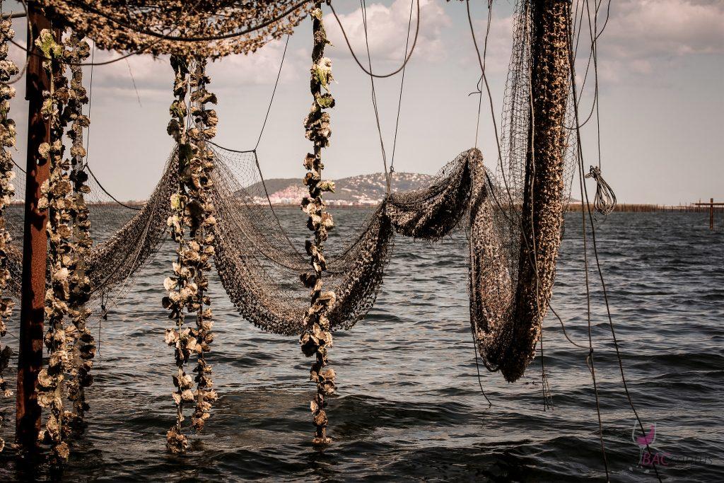 Austernzucht im Bassin de Thau, Marseillhan