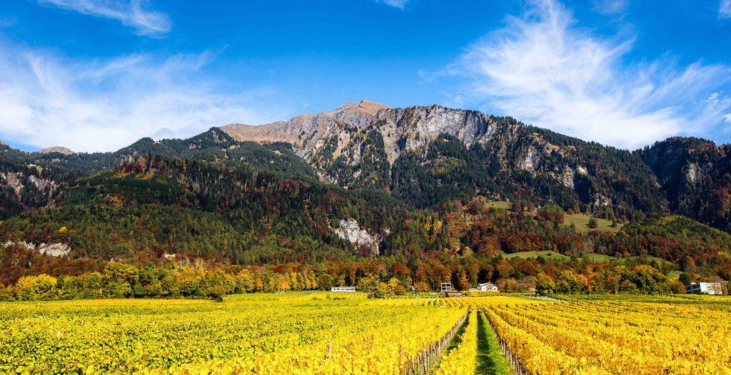 Weingut Donatsch, Malans